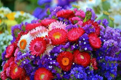 flashcard-flowers